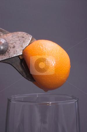 Squeezing an Orange stock photo, Fresh squeezed orange juice. by Robert Byron