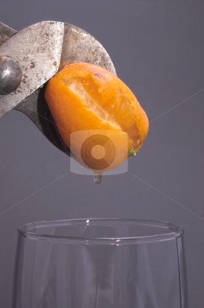 Squeezing an Orange stock photo, Fresh squeezed orange juice. by Robert Byron