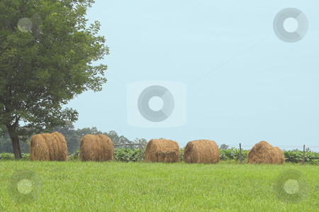 Hay Bales stock photo, A field with bales of wheat hay. by Robert Byron