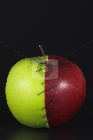 Stitched Apple stock photo, Red and green apple halves stitched together. by Robert Byron