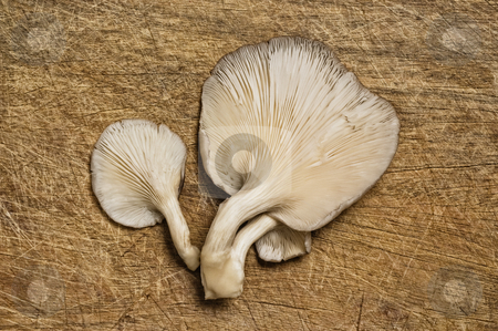 Fresh edible mushrooms stock photo, Fresh edible mushrooms on a wooden table. by Pablo Caridad