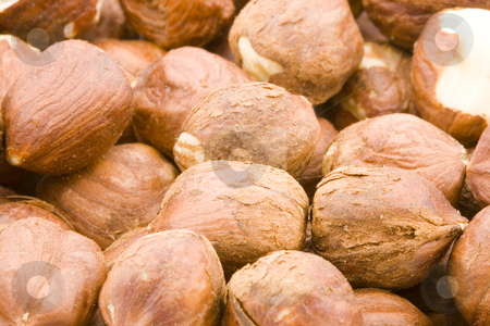 Hazelnuts stock photo, A lot of raw hazelnuts - close up by Petr Koudelka