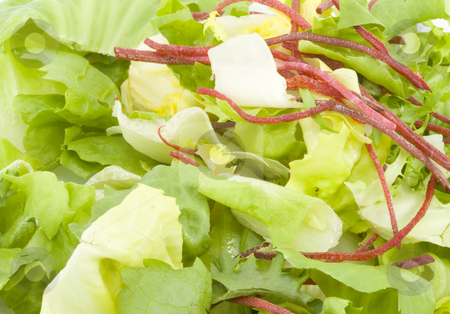 Green Salad stock photo, Lettuce green salad - healthy eating - vegetables - close up by Petr Koudelka