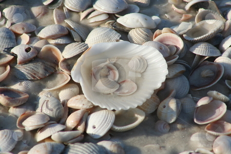 Seashells stock photo, Seashells from Mexico Beach, Florida by Debbie Hayes