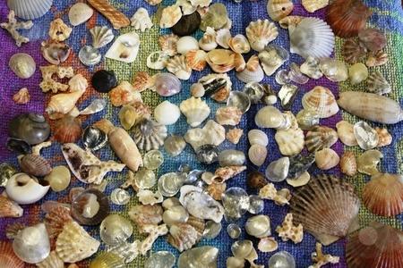 Seashells stock photo, Seashells from Mexico Beach, Florida by Debbie Hayes