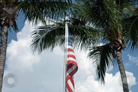 American Flag with Palm Trees stock photo, American Flag framed by palm trees and sky by Robert Cabrera