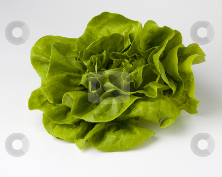 Lettuce stock photo, Green boston lettuce on a white background by Vlad Podkhlebnik
