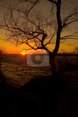Sunset stock photo, A beautiful sunset on a river side and a silhouaite of a tree by Vlad Podkhlebnik