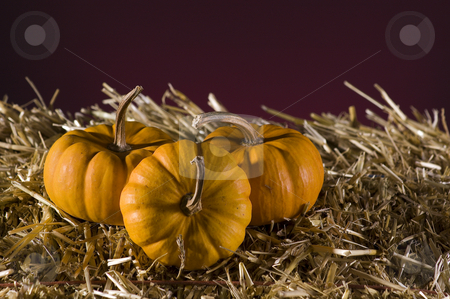 Pumpkins stock photo, Arrangement of squash and corn on a haystack by Vlad Podkhlebnik