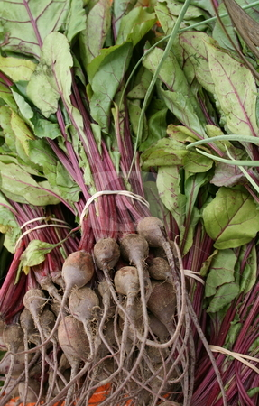 Fresh-picked Beets 2 stock photo, Freshly picked beets with greens, at a farmers' market by Tom and Beth Pulsipher