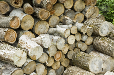 Logs stock photo, A bunch of logs stacked on each other by Vlad Podkhlebnik
