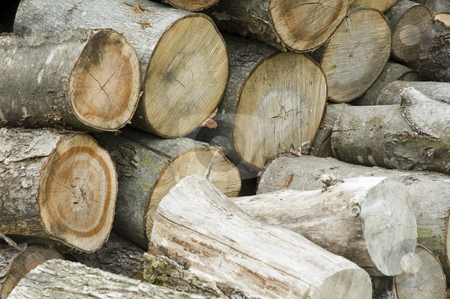 Logs stock photo, Closeup of a bunch of logs stacked on each other by Vlad Podkhlebnik