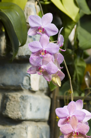 Orchids stock photo, Some colorfull orchids growing in a green house by Vlad Podkhlebnik
