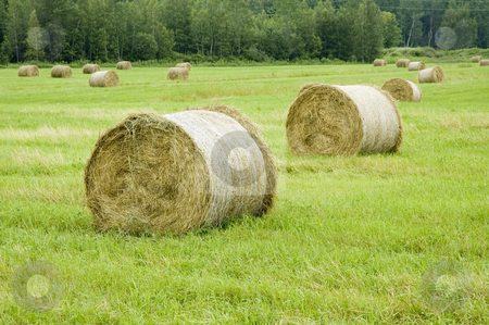 Haystack stock photo, View of some balls of haystack in a field by Vlad Podkhlebnik