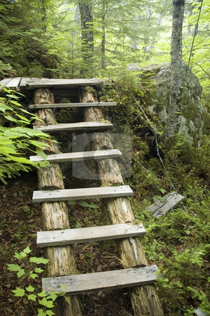 Stairs stock photo, Wood stairs made to cross an accidented forest trail by Vlad Podkhlebnik