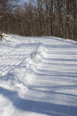 Winter stock photo, Sunny winter landscape  with trees and trails by Vlad Podkhlebnik