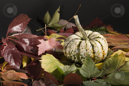 Pumpkin stock photo, A white pumpkin on fallen autumn leaves by Vlad Podkhlebnik