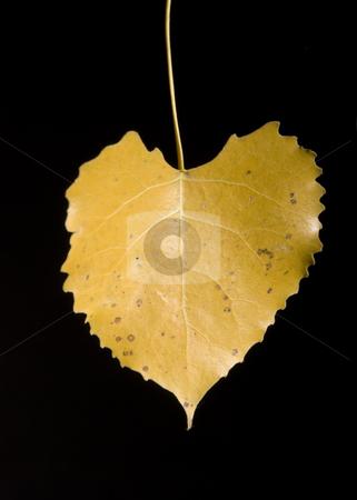 Leaf stock photo, Colorfull fallen leaf on a black background by Vlad Podkhlebnik