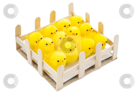 Easter Chickens stock photo, A pen with newborn yellow easter chickens by Petr Koudelka