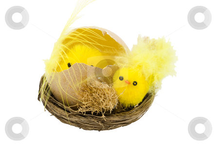 Easter Chickens stock photo, A nest with newborn yellow easter chickens by Petr Koudelka