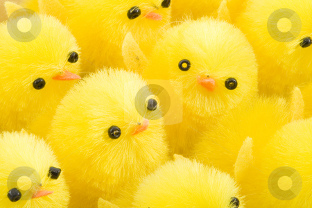 Easter Chickens stock photo, A large group of newborn yellow easter chickens by Petr Koudelka