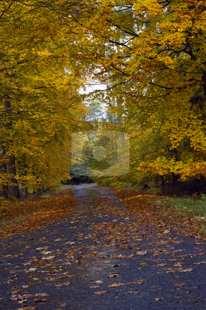 Mountain Road in Autumn stock photo, A small winding mountain road in autumn by Petr Koudelka