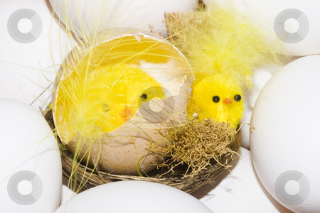 Easter Chickens stock photo, Newborn yellow easter chickens among white eggs by Petr Koudelka