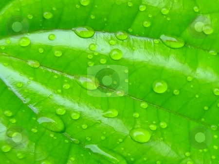 Water droplets on leaf surface stock photo,  by ZaKaRiA- MaStErPiEcE