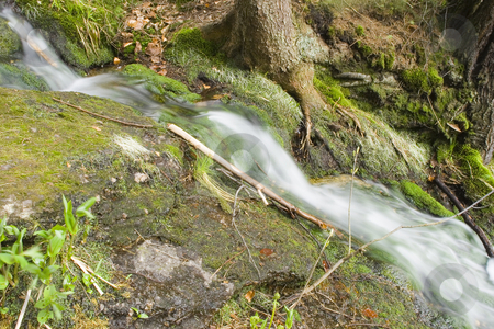 Stream in the Green stock photo, A little stream in the mountain forest by Petr Koudelka