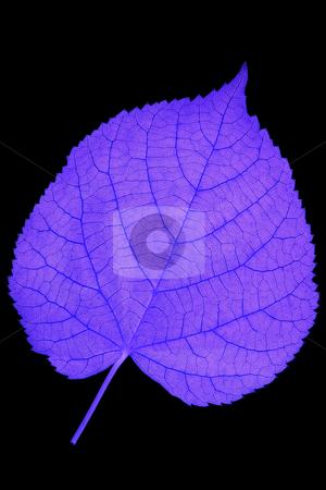 Nervation stock photo, Detail of nervation of a leaf blade - inverted by Petr Koudelka