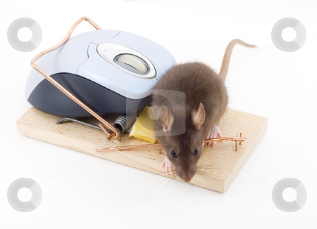 Clever Mouse stock photo, A mouse used his computer sibling to get to the cheese by Petr Koudelka