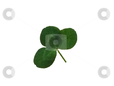 Trefoil stock photo, Detail of a trefoil leaf blade of clover by Petr Koudelka
