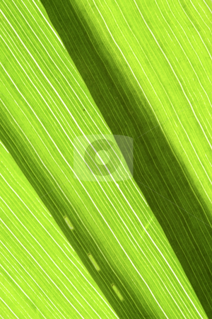 Grass Blades stock photo, Detail of the venation of grass blades by Petr Koudelka
