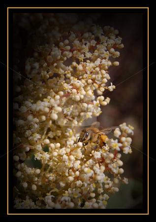 Honey Hunting stock photo, Bee hunting for honey by John Adair
