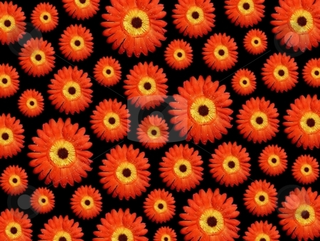 Daisy flowera background stock photo,  by ZaKaRiA- MaStErPiEcE