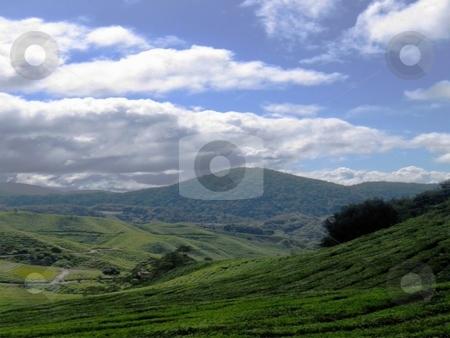 Scenic highlnds tea plantation stock photo, Landscape view of a tea plantation by ZaKaRiA- MaStErPiEcE