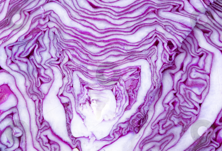 Cabbage Texture stock photo, Texture of a sliced head of cabbage - detail by Petr Koudelka