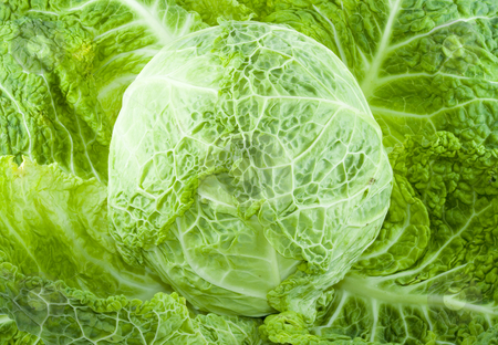 Cabbage stock photo, A piece of green cabbage - vegetable - detail by Petr Koudelka