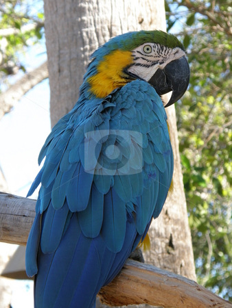 Parrot stock photo, Colorful Parrot by Ritu Jethani