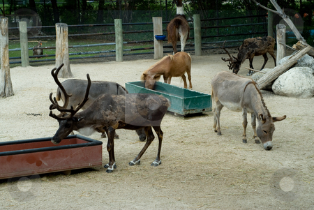Zoo Animals stock photo, Various zoo animals in an enclosed space, living together by Richard Nelson
