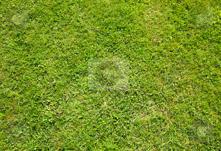 Green summer grass texture close up background. stock photo, Green summer grass texture close up background. by Stephen Rees