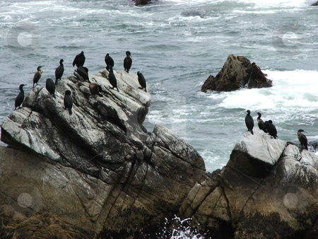 California marine birds claim coastal rocks stock photo, Even on a cloudy day driving California Pacific Coast Highway (Highway 1) between San Francisco and Big Sur it doesn't take long to see why people want to live here.  Marine birds here occupy a big rock in the Pacific Ocean south of San Francisco near Pacifica. by Dennis Thomsen