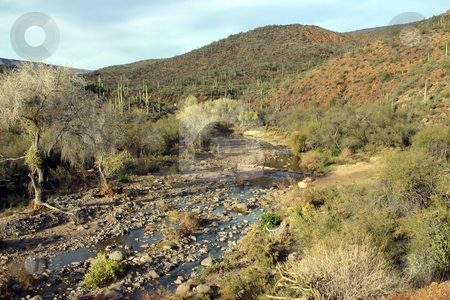 Arizona River stock photo, A river runs through the Arizona desert by MIca Mulloy