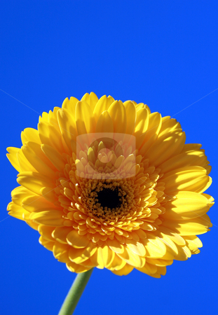 Yellow Flower stock photo, Close shots of a yellow flower. by MIca Mulloy