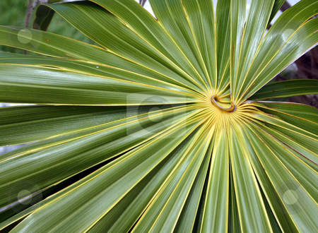 Mexican Leaves stock photo, A tropic plant near Cancun, Mexico by MIca Mulloy