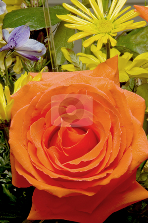 Assorted Roses stock photo, An assortment of fresh and colorful cut roses. by Robert Byron