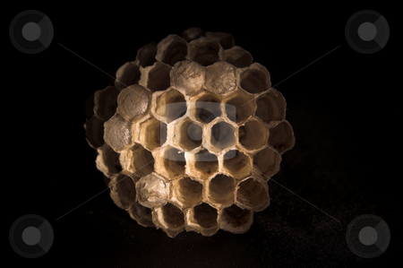 Wasps Nest on black stock photo, A paper wasps nest with live young inside combs. by Robert Byron