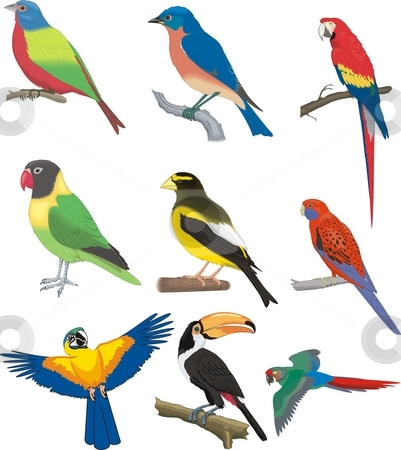 Multiple birds stock photo, Vector design elements print, creacive by Zirbo Ovidiu