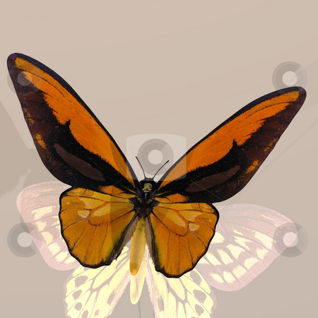 Digital Butterfly stock photo, Rendered image of a beautiful butterfly - with Clipping Path by Ralf Kraft