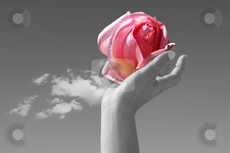 Perfum stock photo, A delicate rose lovingly held in one woman hand by Serge VILLA